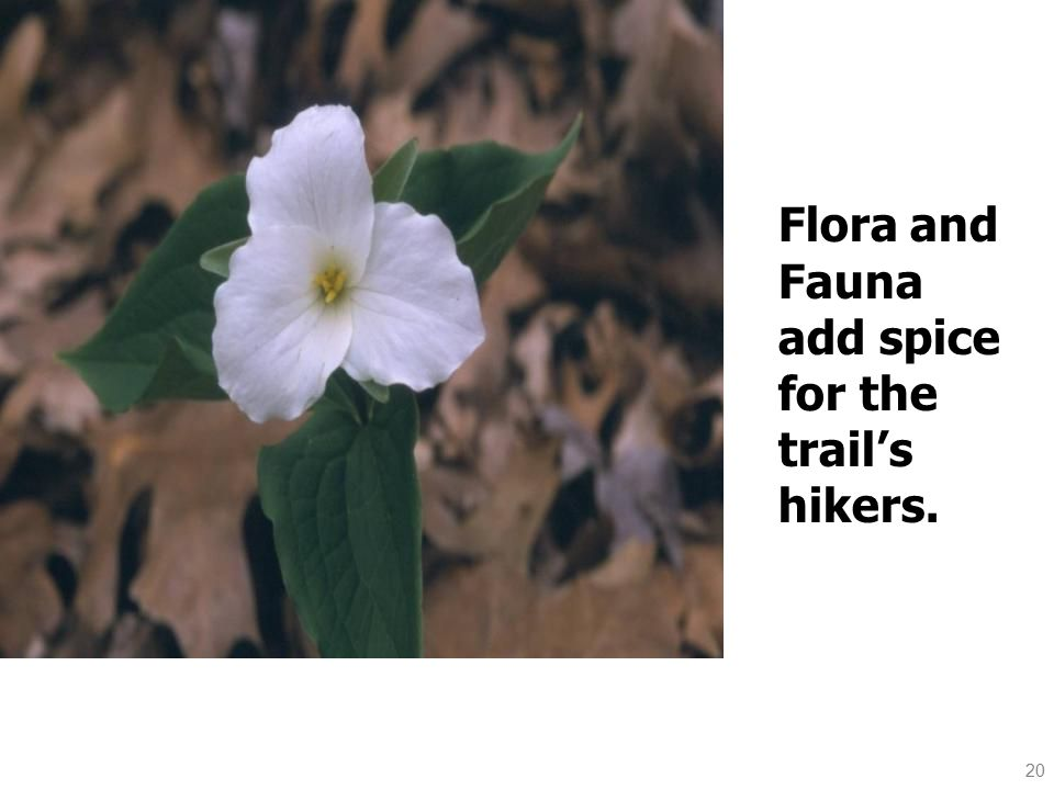 20 Flora and Fauna add spice for the trail's hikers..