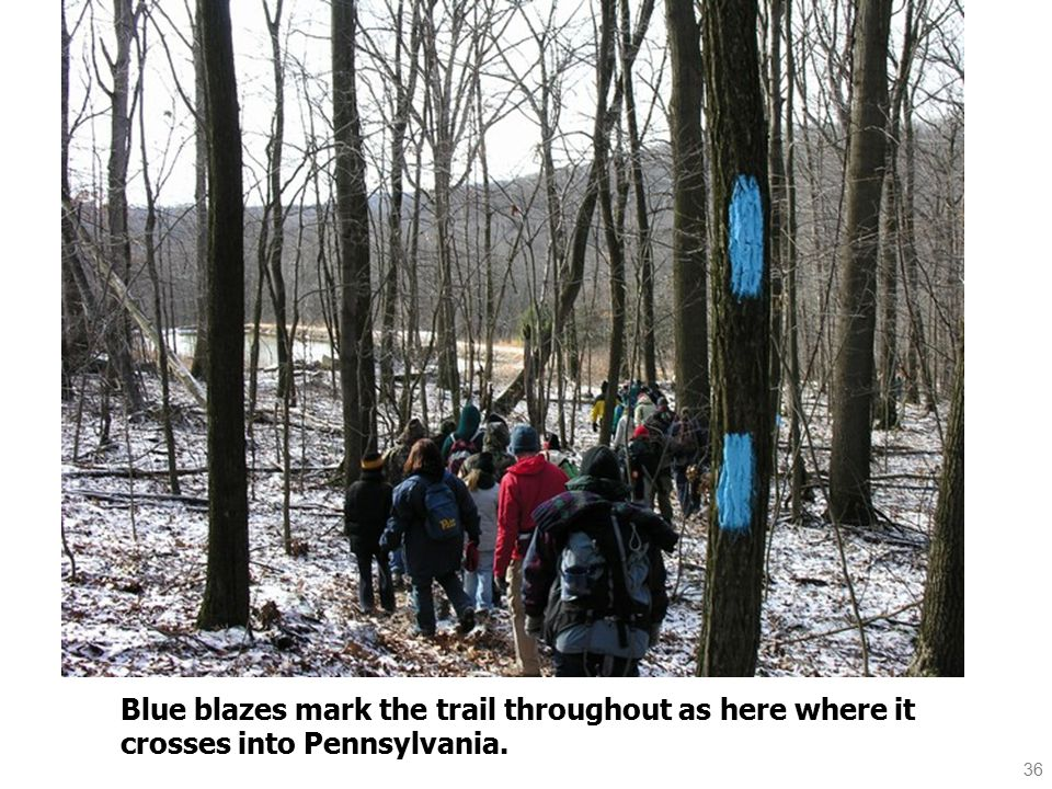 36 Blue blazes mark the trail throughout as here where it crosses into Pennsylvania.