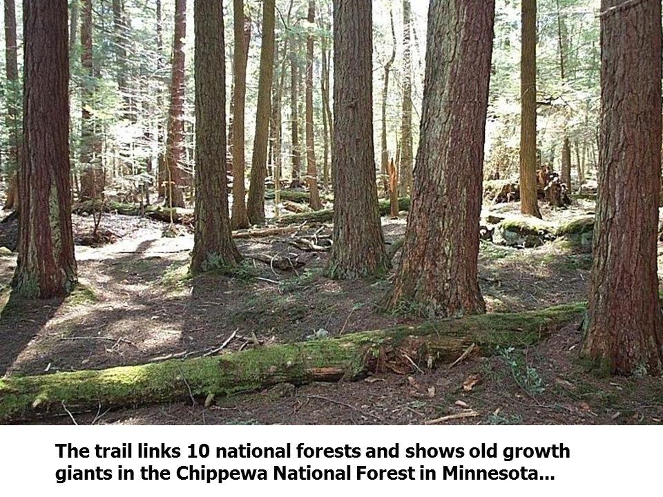 …or dark cedar swamps in Upper Michigan's Hiawatha National Forest.