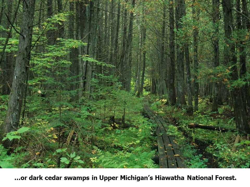 97 Source: http://www.hillsdalecounty.info/mapspage0002.asp Hillsdale County, Michigan