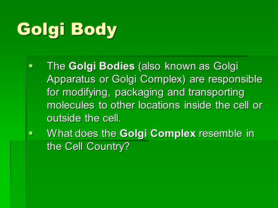 Golgi Body  The Golgi Bodies (also known as Golgi Apparatus or Golgi Complex) are responsible for modifying, packaging and transporting molecules to