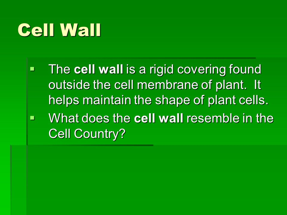Cell Wall  The cell wall is a rigid covering found outside the cell membrane of plant. It helps maintain the shape of plant cells.  What does the ce