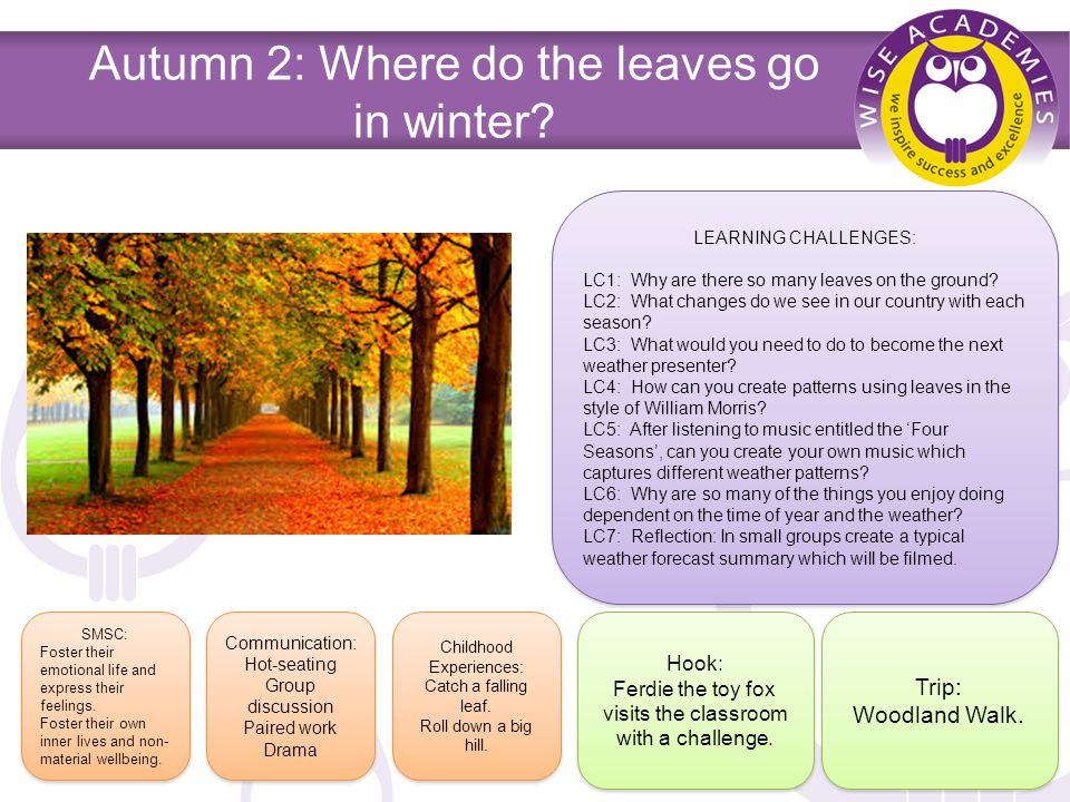 Autumn 2: Where do the leaves go in winter.