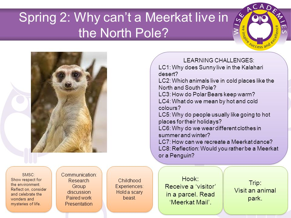 Spring 2: Why can't a Meerkat live in the North Pole.