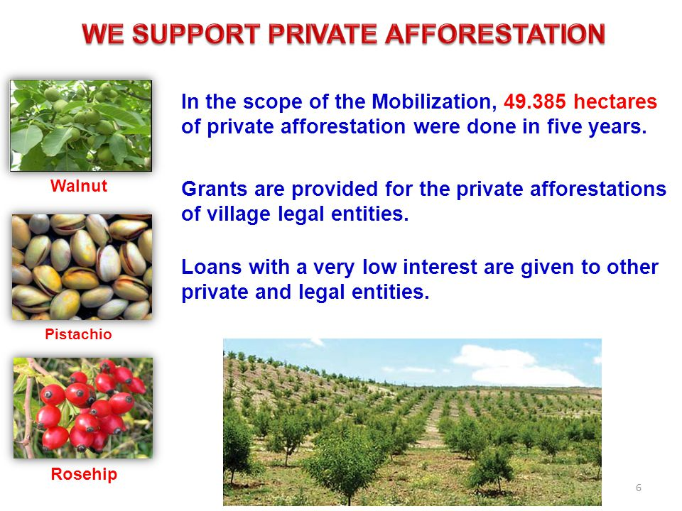 Grants are provided for the private afforestations of village legal entities.