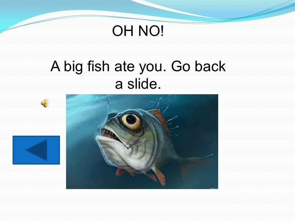 OH NO! A big fish ate you. Go back a slide.