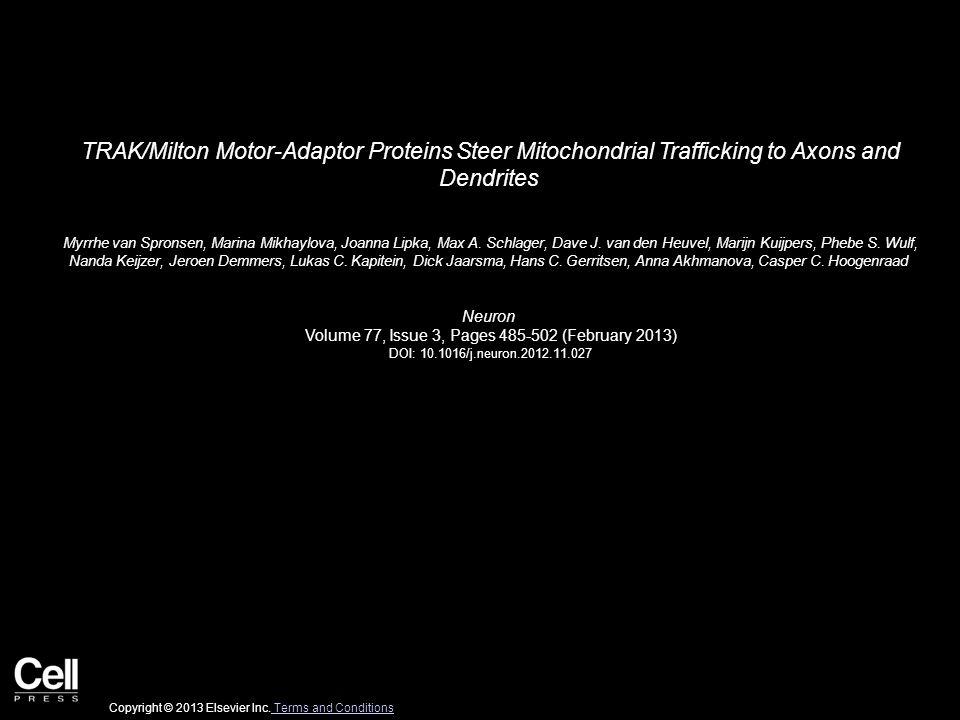 TRAK/Milton Motor-Adaptor Proteins Steer Mitochondrial Trafficking to Axons and Dendrites Myrrhe van Spronsen, Marina Mikhaylova, Joanna Lipka, Max A.