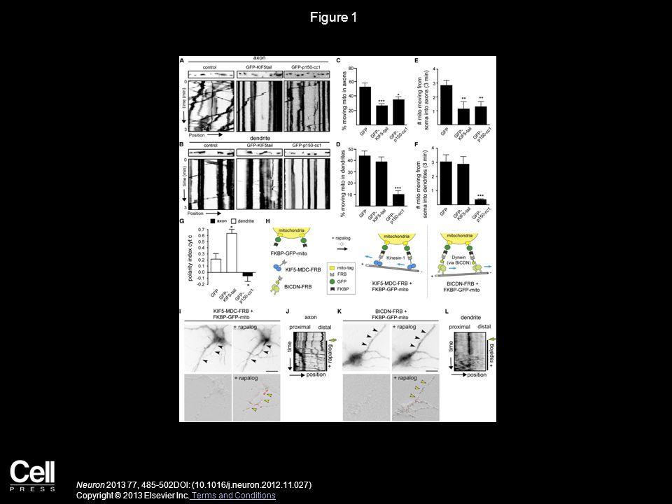 Figure 1 Neuron 2013 77, 485-502DOI: (10.1016/j.neuron.2012.11.027) Copyright © 2013 Elsevier Inc. Terms and Conditions Terms and Conditions