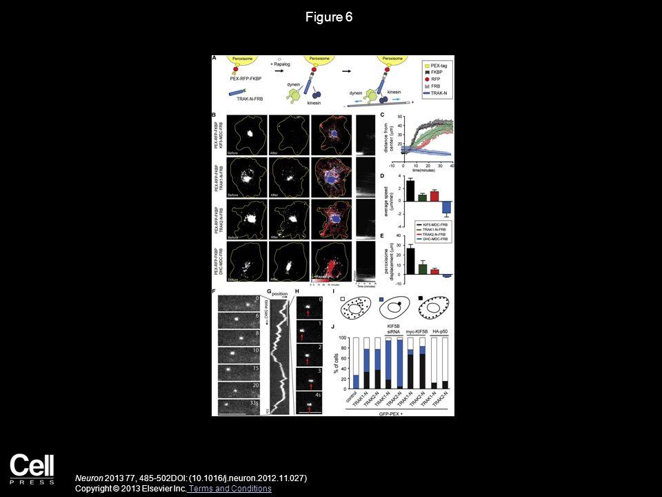 Figure 6 Neuron 2013 77, 485-502DOI: (10.1016/j.neuron.2012.11.027) Copyright © 2013 Elsevier Inc.