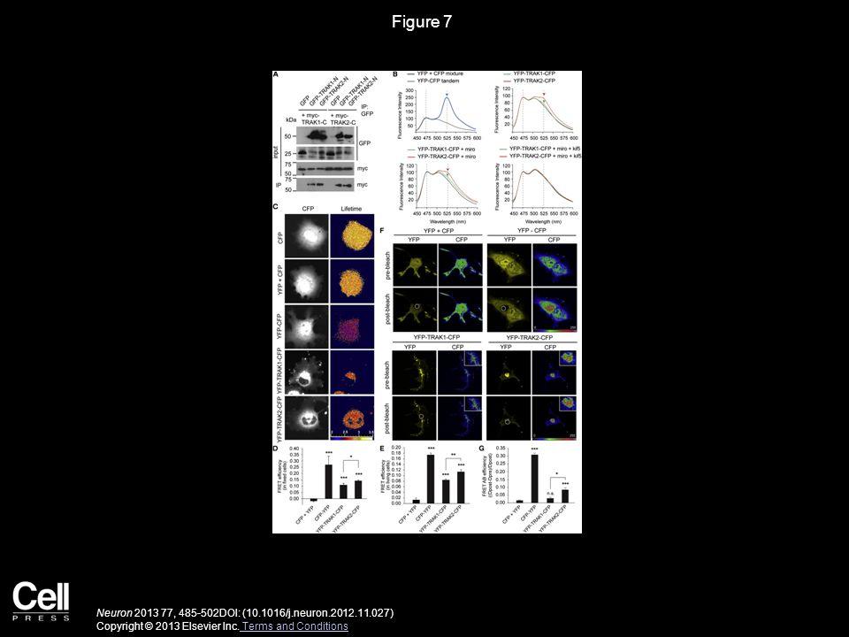 Figure 7 Neuron 2013 77, 485-502DOI: (10.1016/j.neuron.2012.11.027) Copyright © 2013 Elsevier Inc. Terms and Conditions Terms and Conditions