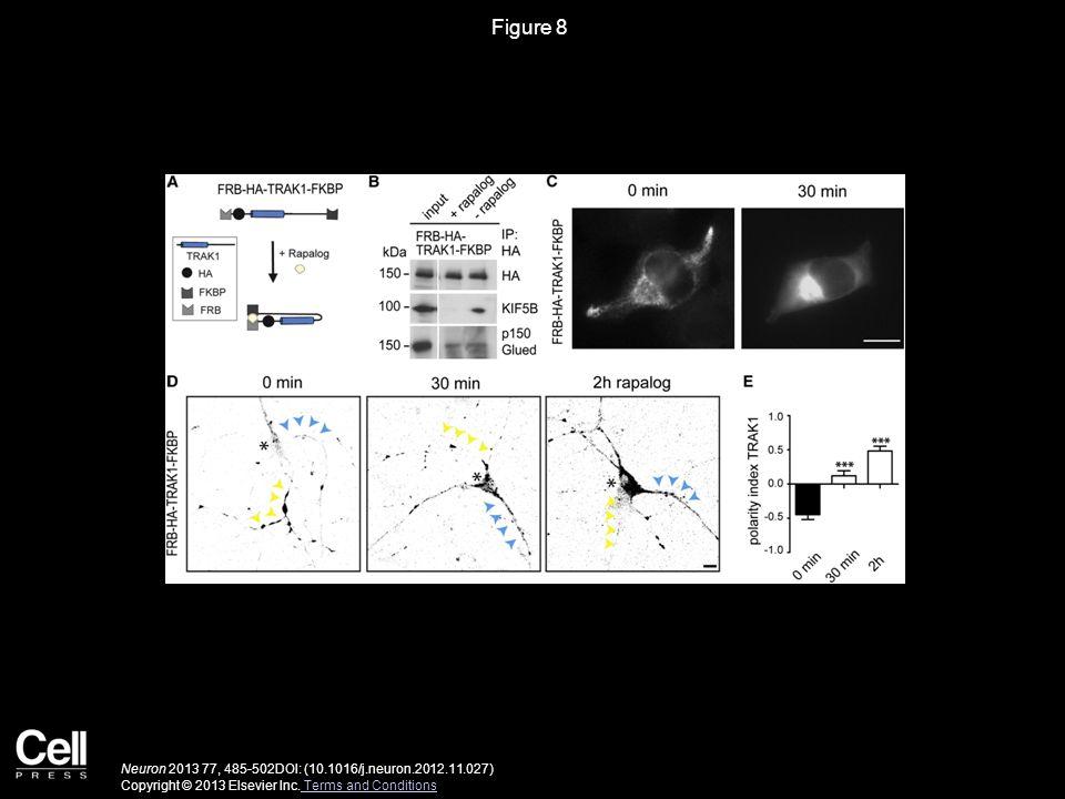 Figure 8 Neuron 2013 77, 485-502DOI: (10.1016/j.neuron.2012.11.027) Copyright © 2013 Elsevier Inc. Terms and Conditions Terms and Conditions