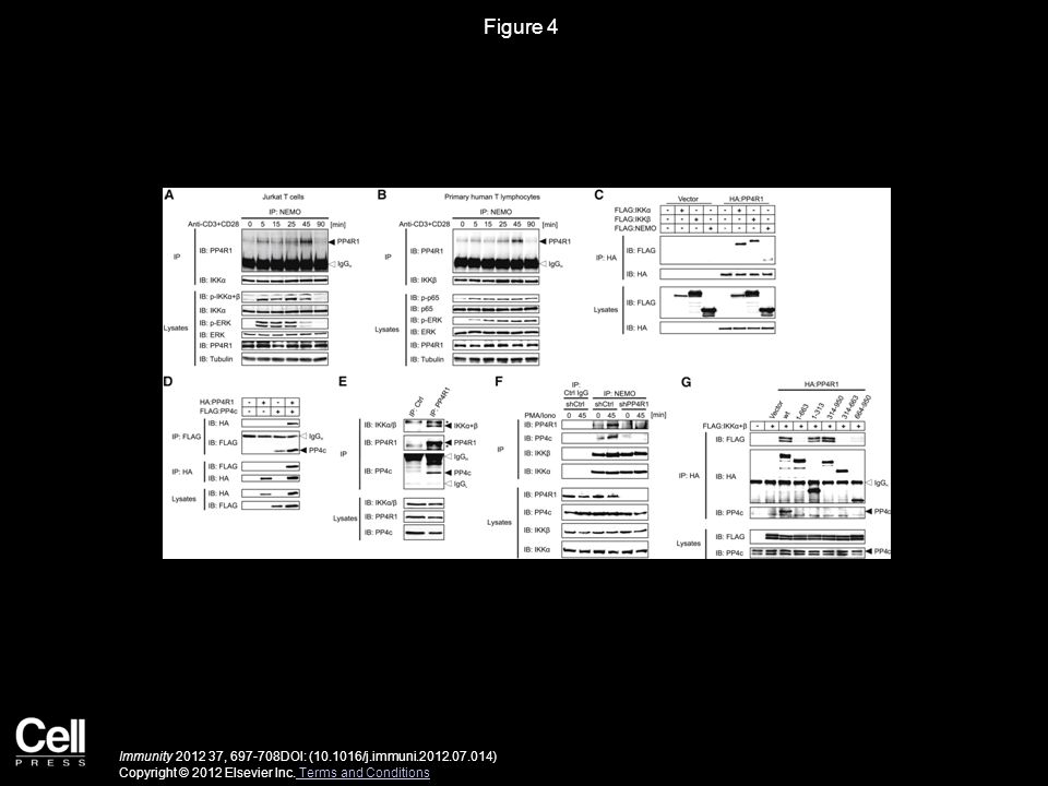 Figure 4 Immunity 2012 37, 697-708DOI: (10.1016/j.immuni.2012.07.014) Copyright © 2012 Elsevier Inc. Terms and Conditions Terms and Conditions