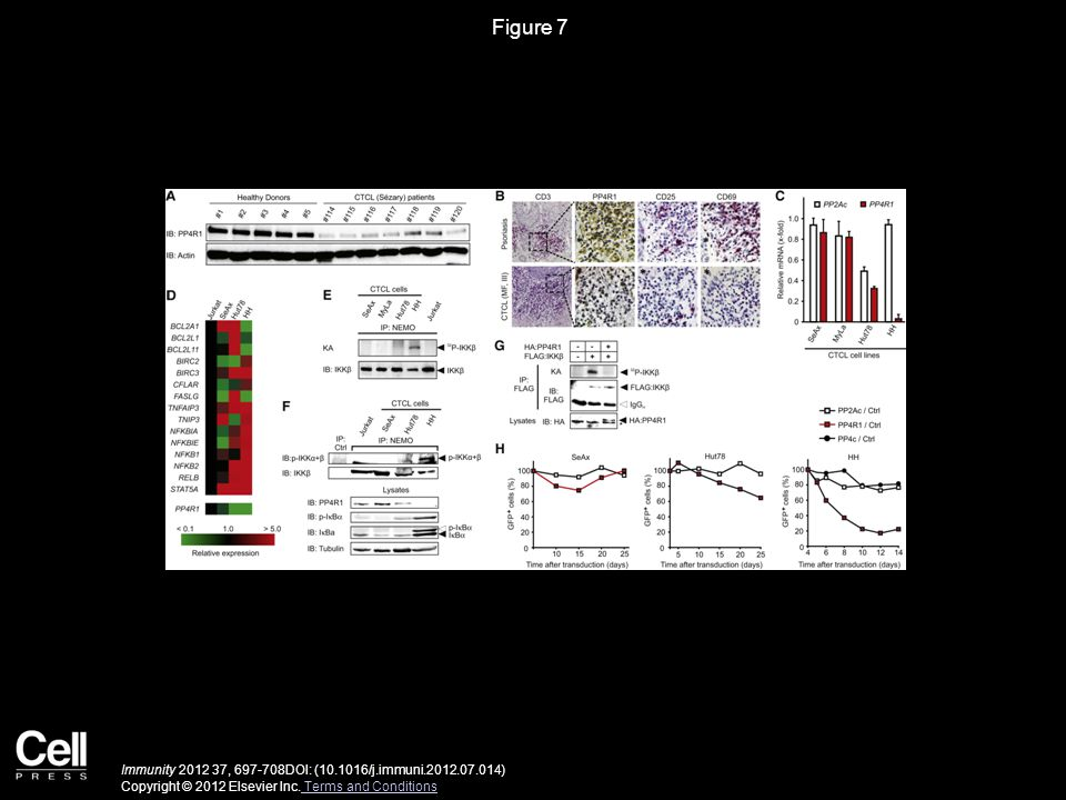 Figure 7 Immunity 2012 37, 697-708DOI: (10.1016/j.immuni.2012.07.014) Copyright © 2012 Elsevier Inc. Terms and Conditions Terms and Conditions