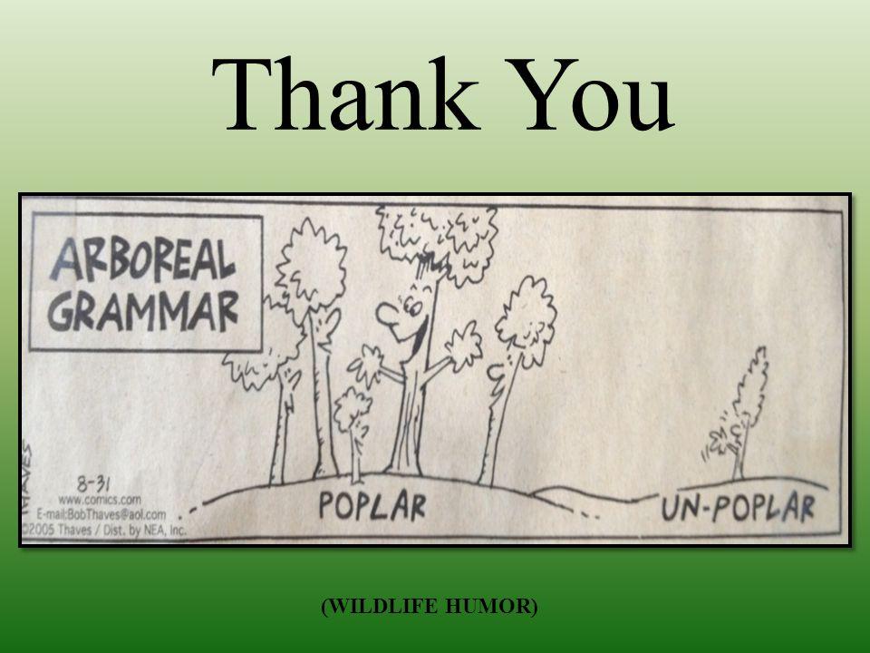 Thank You (WILDLIFE HUMOR)