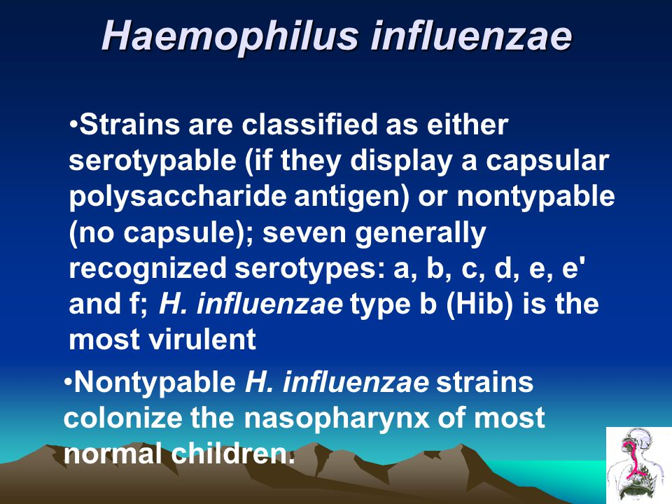 Haemophilus influenzae Strains are classified as either serotypable (if they display a capsular polysaccharide antigen) or nontypable (no capsule); seven generally recognized serotypes: a, b, c, d, e, e and f; H.