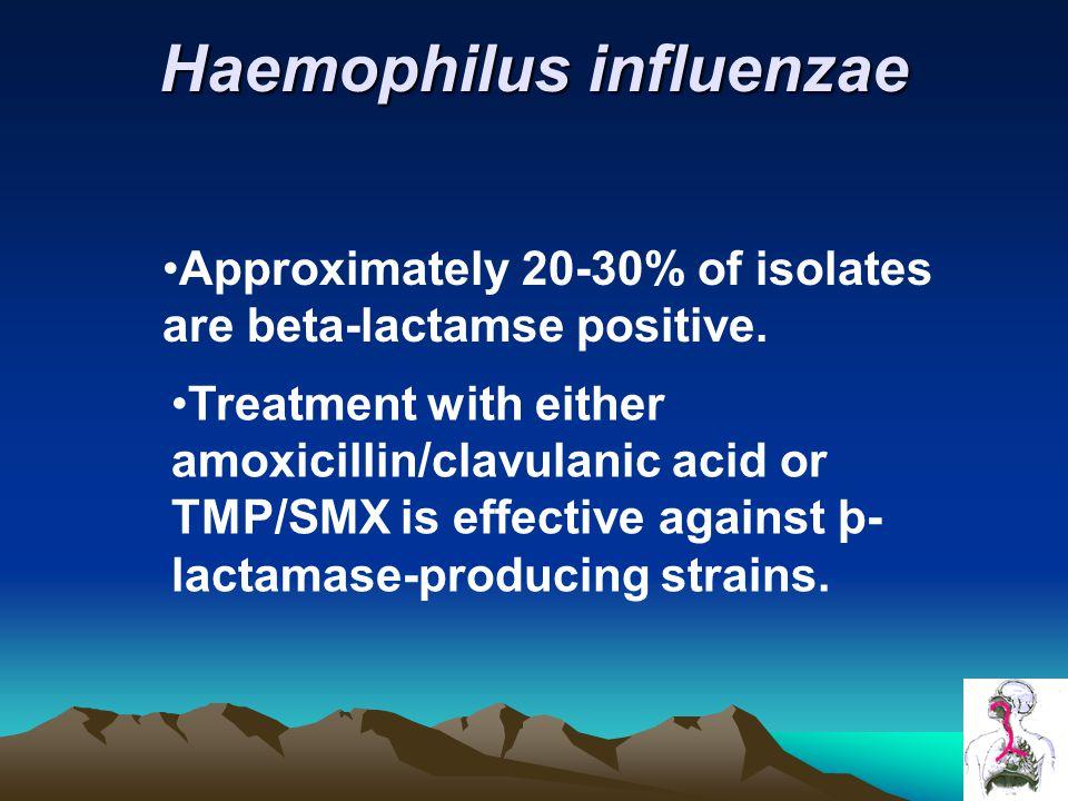 Haemophilus influenzae Approximately 20-30% of isolates are beta-lactamse positive.