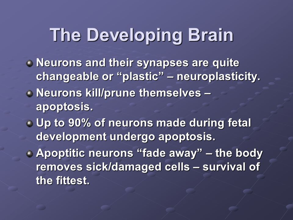The Developing Brain Neurons and their synapses are quite changeable or plastic – neuroplasticity.