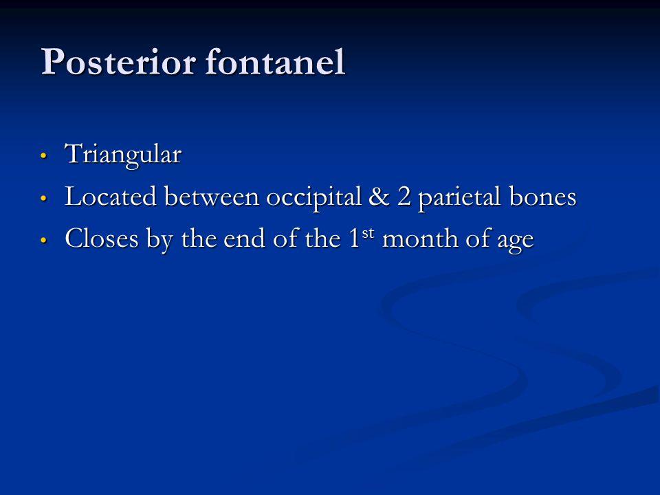 Posterior fontanel Triangular Triangular Located between occipital & 2 parietal bones Located between occipital & 2 parietal bones Closes by the end o