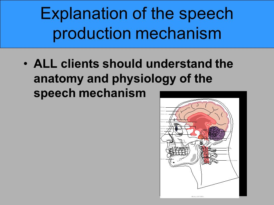 Explanation of the speech production mechanism ALL clients should understand the anatomy and physiology of the speech mechanism