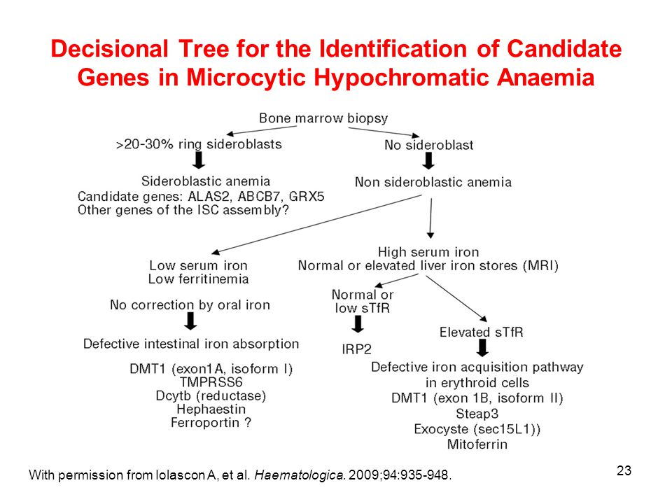 23 Decisional Tree for the Identification of Candidate Genes in Microcytic Hypochromatic Anaemia With permission from Iolascon A, et al.