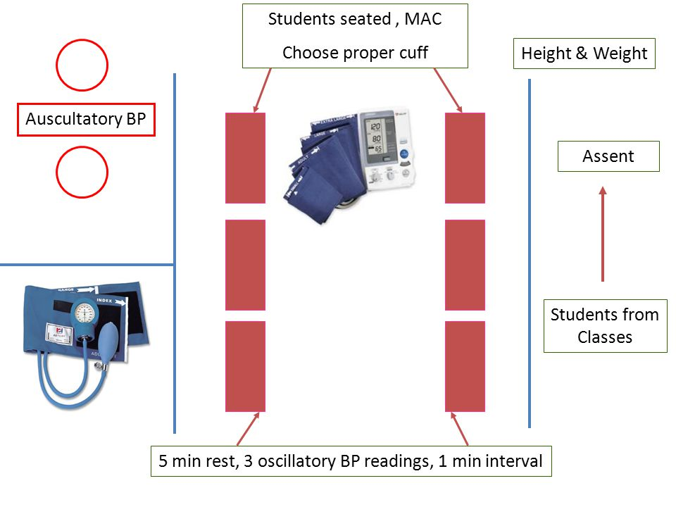 Height & Weight Assent Students seated, MAC Choose proper cuff Auscultatory BP Students from Classes 5 min rest, 3 oscillatory BP readings, 1 min interval