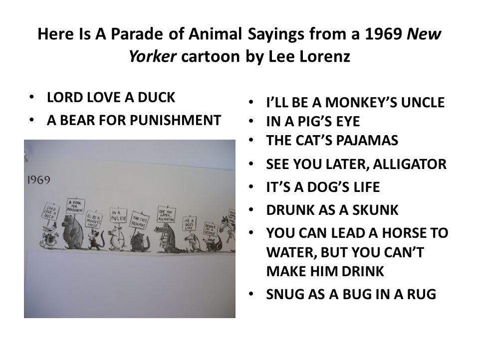 Here Is A Parade of Animal Sayings from a 1969 New Yorker cartoon by Lee Lorenz LORD LOVE A DUCK A BEAR FOR PUNISHMENT I'LL BE A MONKEY'S UNCLE IN A PIG'S EYE THE CAT'S PAJAMAS SEE YOU LATER, ALLIGATOR IT'S A DOG'S LIFE DRUNK AS A SKUNK YOU CAN LEAD A HORSE TO WATER, BUT YOU CAN'T MAKE HIM DRINK SNUG AS A BUG IN A RUG