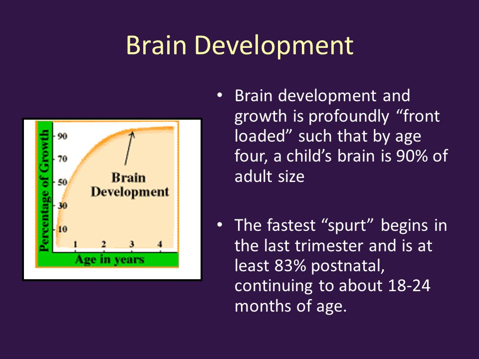 Brain Development Brain development and growth is profoundly front loaded such that by age four, a child's brain is 90% of adult size The fastest spurt begins in the last trimester and is at least 83% postnatal, continuing to about 18-24 months of age.