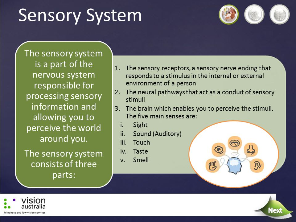 1.The sensory receptors, a sensory nerve ending that responds to a stimulus in the internal or external environment of a person 2.The neural pathways