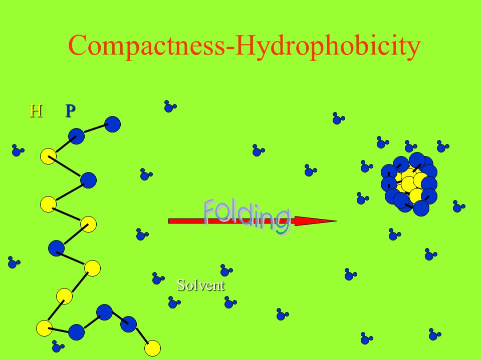Compactness-Hydrophobicity HP Solvent