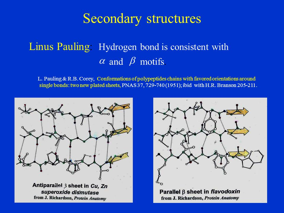 Secondary structures Linus Pauling: L.Pauling & R.B.