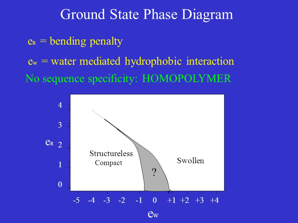 -5 -4 -3 -2 -1 0 +1 +2 +3 +4 e W 4321043210 eReR Ground State Phase Diagram e w = water mediated hydrophobic interaction No sequence specificity: HOMOPOLYMER e R = bending penalty Structureless Compact Swollen ?