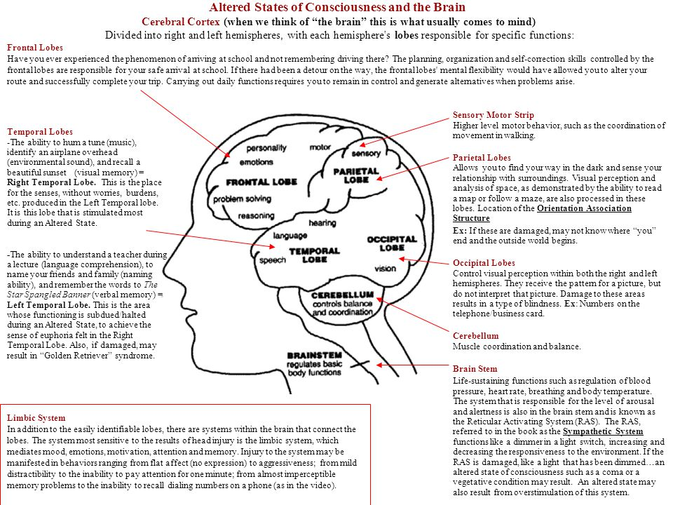 Altered States of Consciousness and the Brain Cerebral Cortex (when we think of the brain this is what usually comes to mind) Divided into right and left hemispheres, with each hemisphere s lobes responsible for specific functions: Frontal Lobes Have you ever experienced the phenomenon of arriving at school and not remembering driving there.