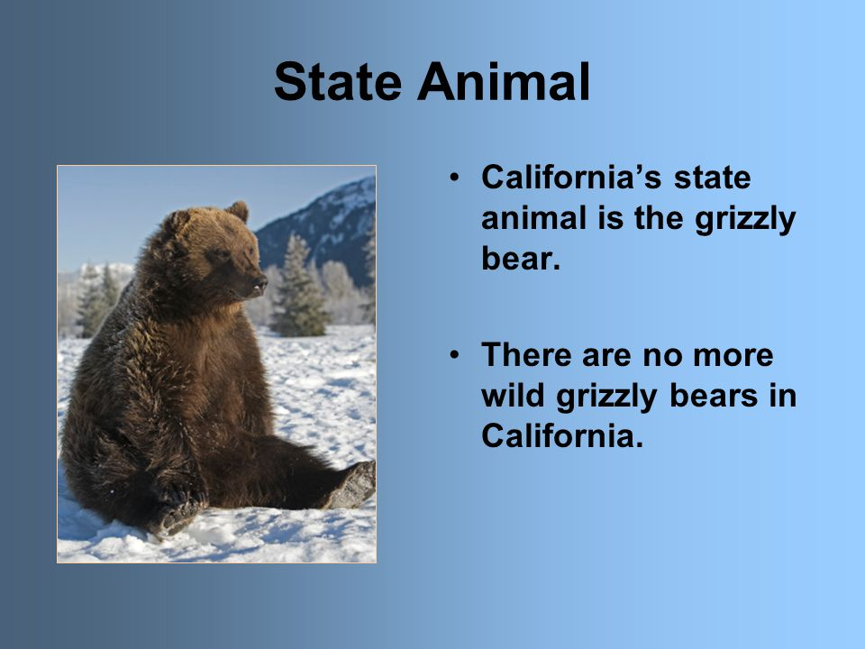 State Animal California's state animal is the grizzly bear.