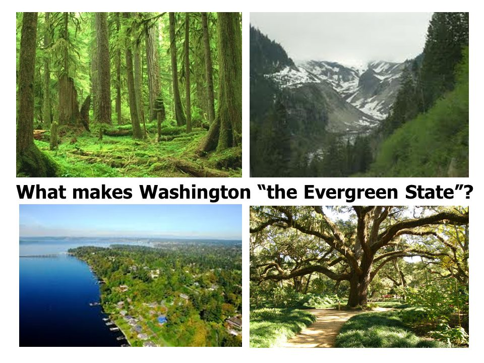 What makes Washington the Evergreen State ? Washington Oaks Gardens State Park