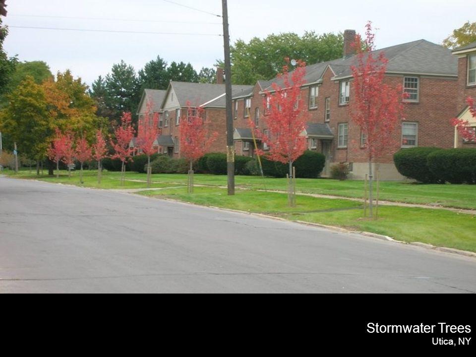 Stormwater Trees Utica, NY