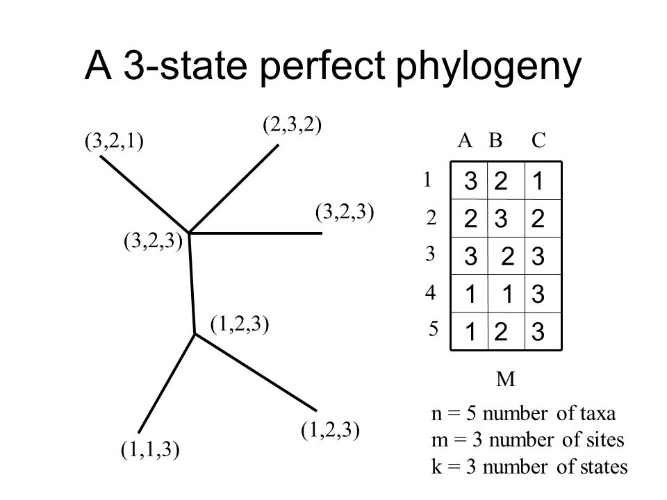 A 3-state perfect phylogeny 32 1 3 1 1 3 2 3 23 2 12 3 A B C 1 2 3 4 5 M n = 5 number of taxa m = 3 number of sites k = 3 number of states (3,2,1) ‏ (