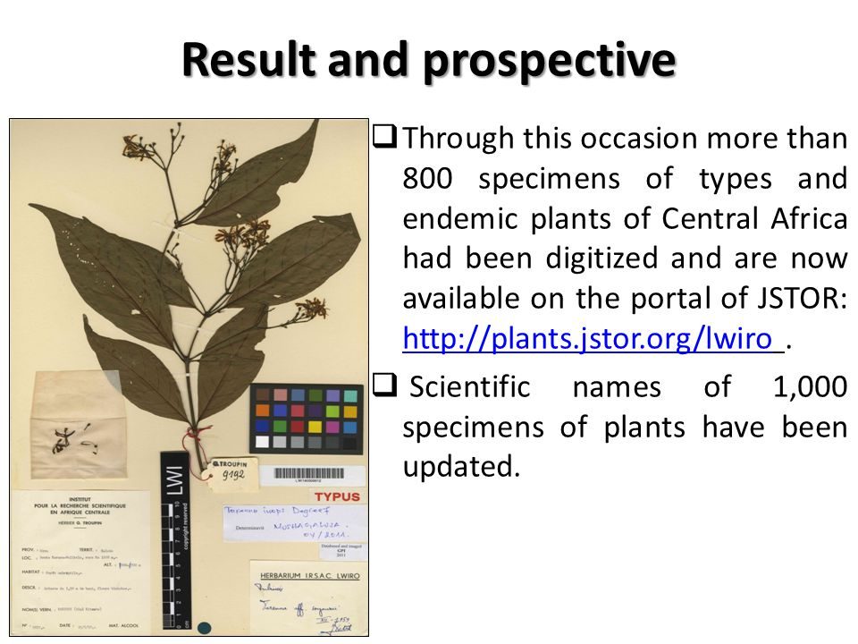 Result and prospective  Through this occasion more than 800 specimens of types and endemic plants of Central Africa had been digitized and are now available on the portal of JSTOR: http://plants.jstor.org/lwiro.