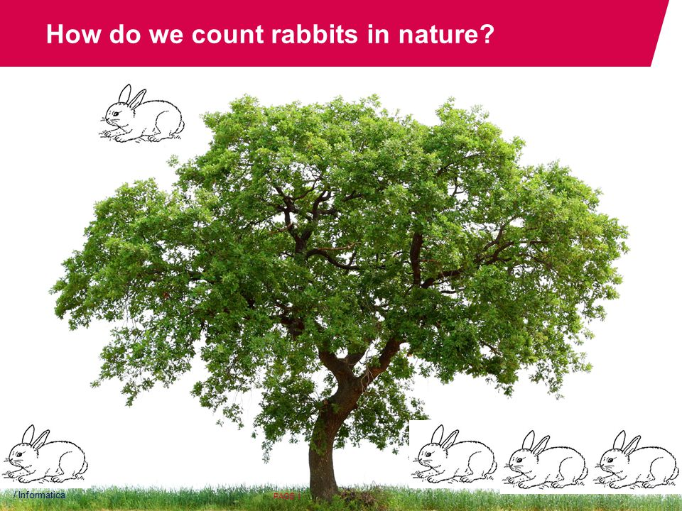 How do we count rabbits in nature / Informatica PAGE 1