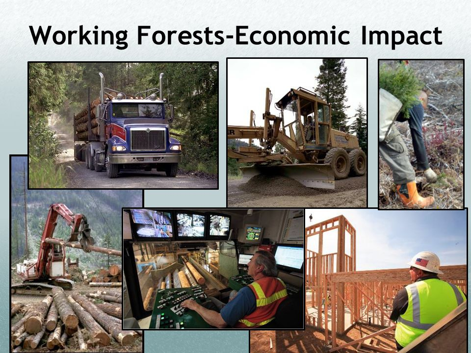 Working Forests-Economic Impact