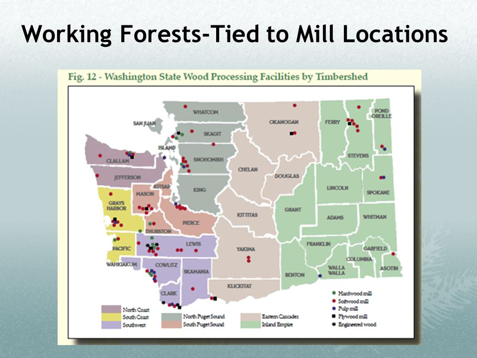 Working Forests-Tied to Mill Locations