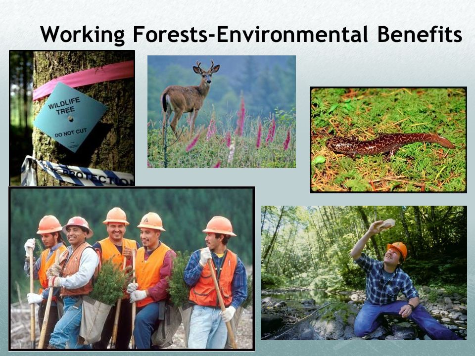 Working Forests-Environmental Benefits