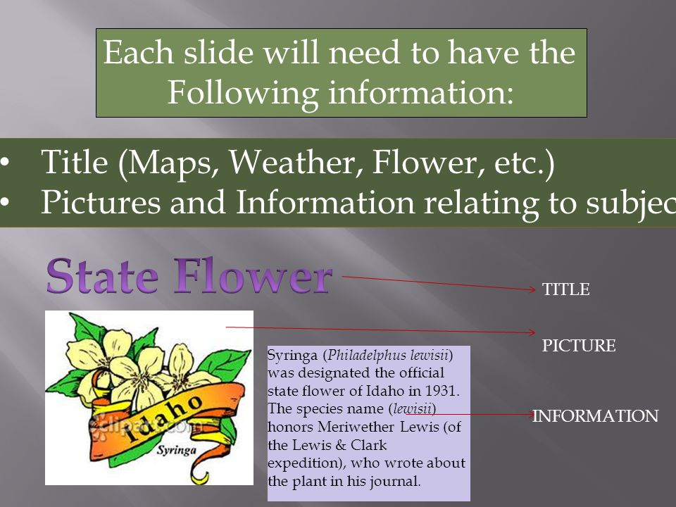 Each slide will need to have the Following information: Title (Maps, Weather, Flower, etc.) Pictures and Information relating to subject Syringa ( Philadelphus lewisii ) was designated the official state flower of Idaho in 1931.
