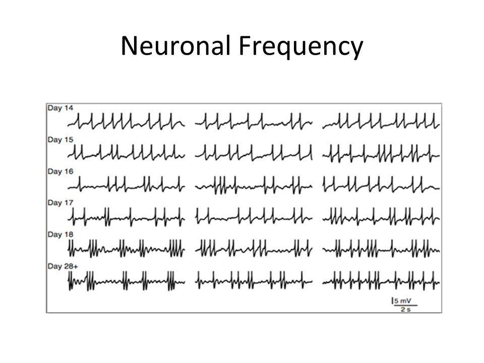 Neuronal Frequency