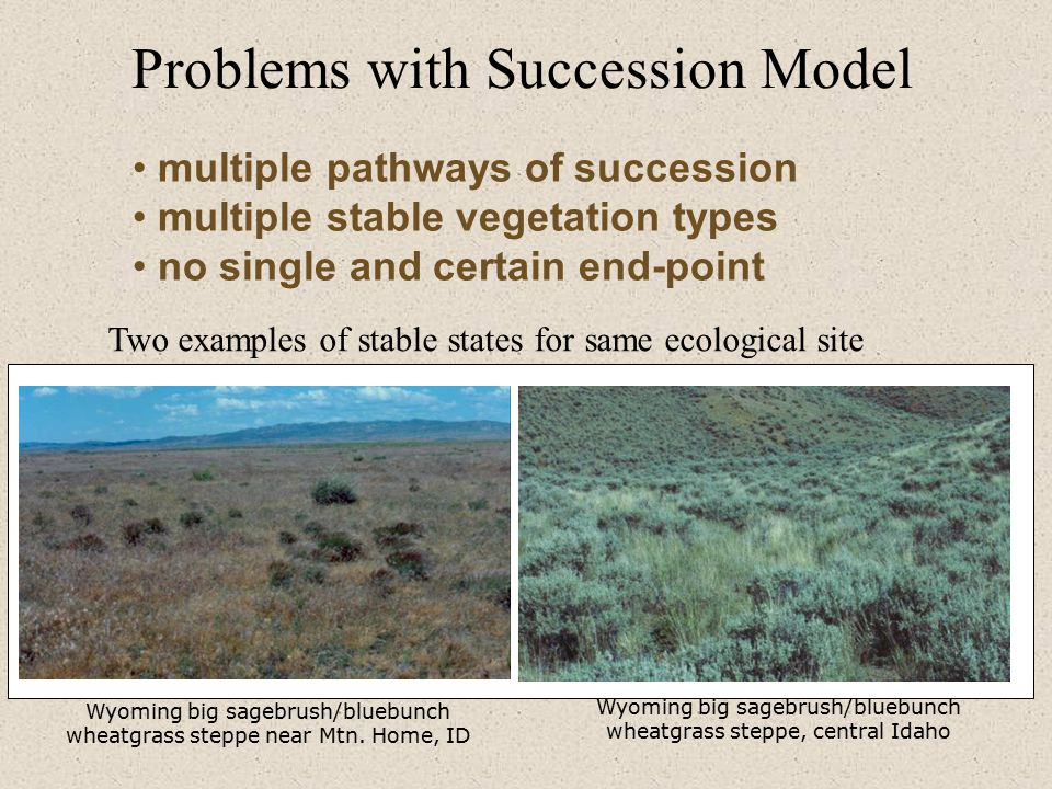Problems with Succession Model Wyoming big sagebrush/bluebunch wheatgrass steppe near Mtn.