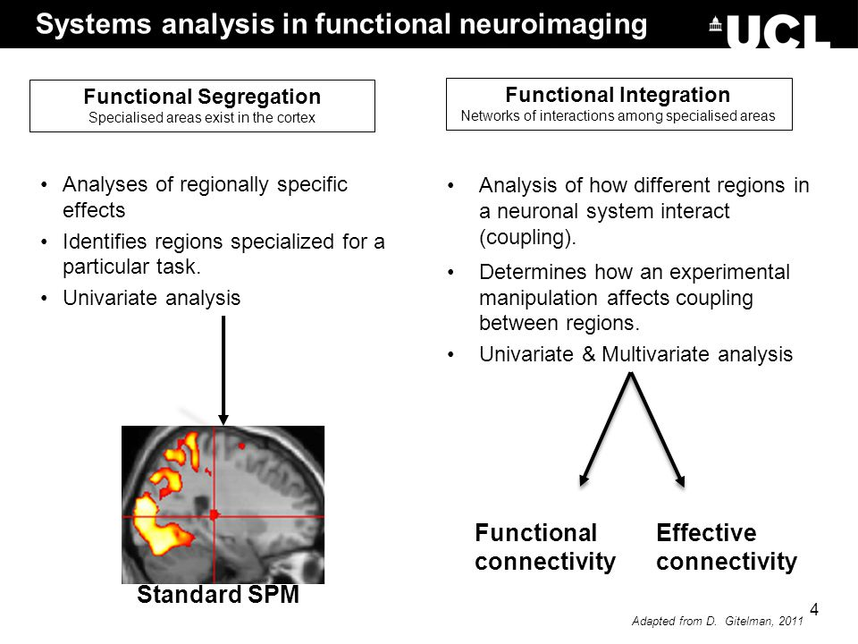 Analysis of how different regions in a neuronal system interact (coupling). Determines how an experimental manipulation affects coupling between regio