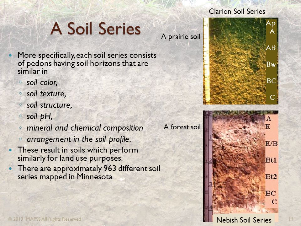 A Soil Series More specifically, each soil series consists of pedons having soil horizons that are similar in ◦ soil color, ◦ soil texture, ◦ soil str