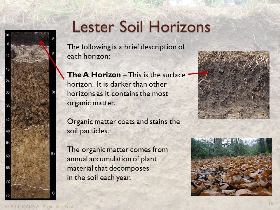 Lester Soil Horizons The following is a brief description of each horizon: The A Horizon – This is the surface horizon. It is darker than other horizo