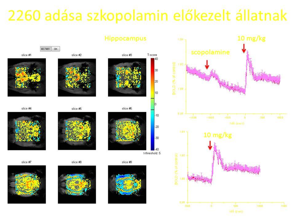 2260 adása szkopolamin előkezelt állatnak Hippocampus10 mg/kg scopolamine 10 mg/kg