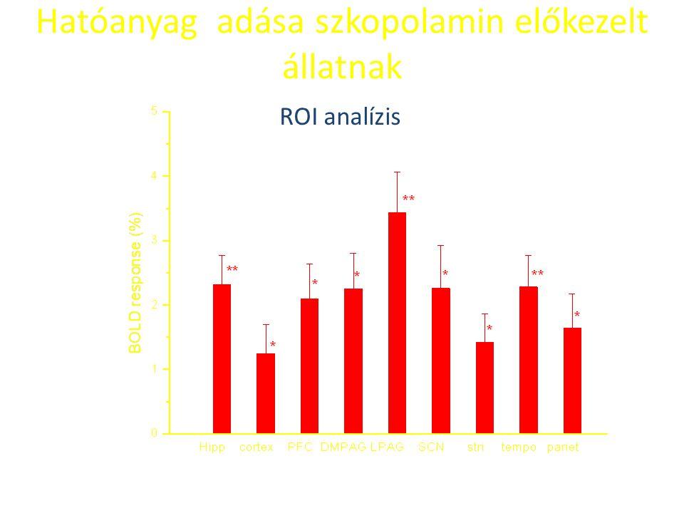Hatóanyag adása szkopolamin előkezelt állatnak ROI analízis