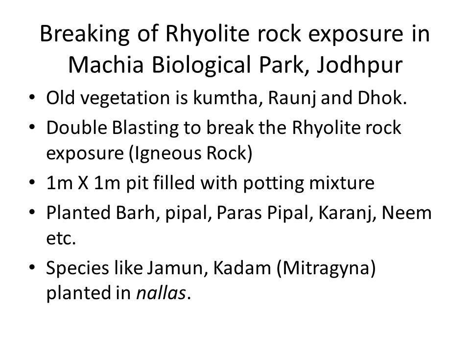 Breaking of Rhyolite rock exposure in Machia Biological Park, Jodhpur Old vegetation is kumtha, Raunj and Dhok. Double Blasting to break the Rhyolite